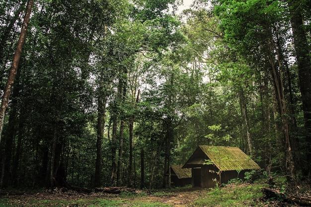 Stara drewniana chałupa w lesie