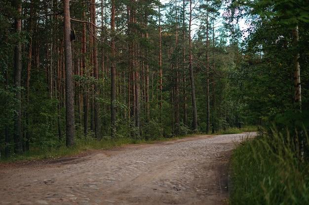 Stara kamienna droga w lesie sosnowym pusta droga kamienna w sosnowym lesie
