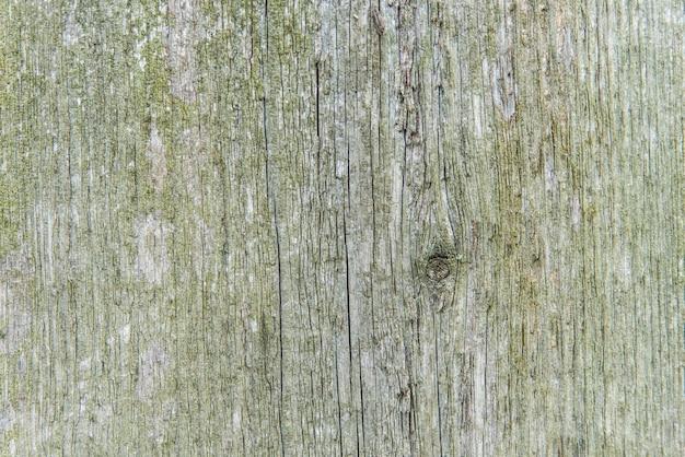 Stara tekstura drzewa z mchem