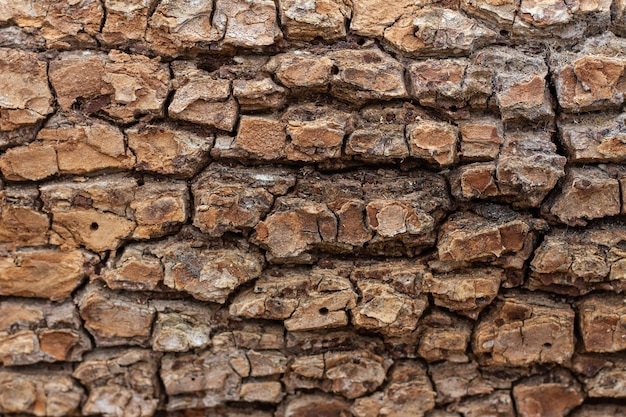 Stara tekstura tłoczonej kory drzewa z bliska. naturalne tło
