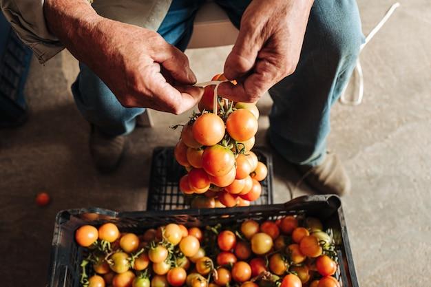 Stara tradycja wieszania pomidorów cherry na ścianie, aby je zachować