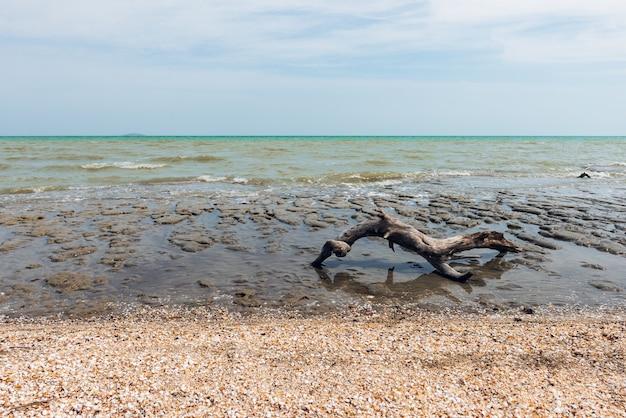 Stare drewno dryfujące nad brzegiem morza