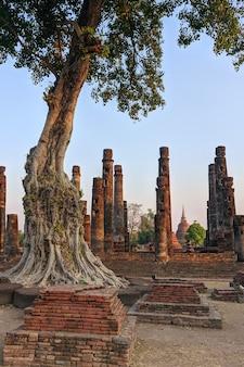 Stare drzewa i ruiny w historycznym parku sukhothai w tajlandii