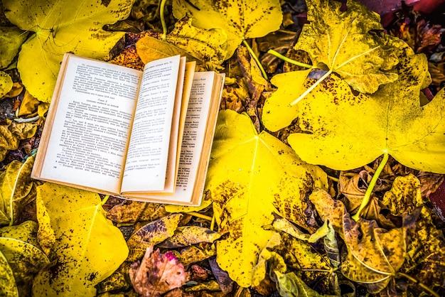 Stare książki jesienią liści