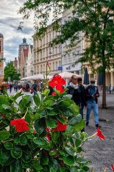 Stare miasto w niemieckim mieście ingolstadt