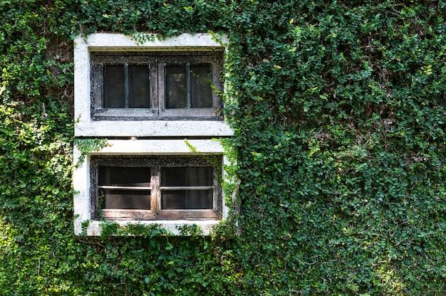 Stare okna z roślinami, ogród pionowy