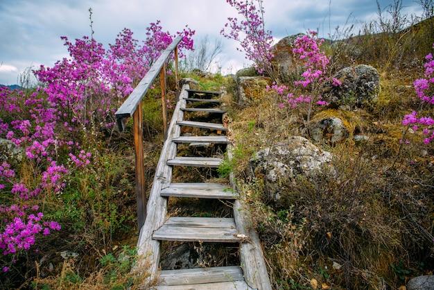Stare schody z drewnianymi schodkami wznoszą się na niewielkie wzgórze porośnięte trawą i krzewami z fioletowymi kwiatami.