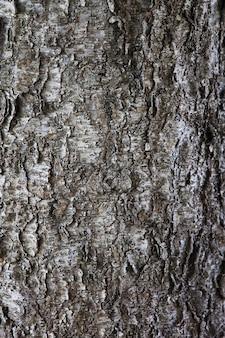 Stare tekstury kory drzewa