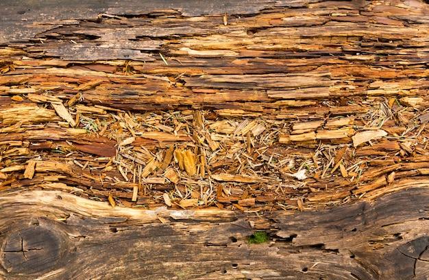 Stare zgniłe drewno