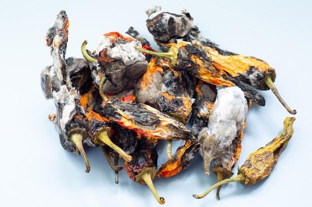 Stare zgniłe papryki i bakłażan z pleśnią na szarej powierzchni. koncepcja chorób grzybiczych roślin.