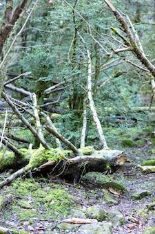 Stare złamane drzewo