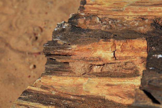 Starożytne drzewa na saharze, sudan