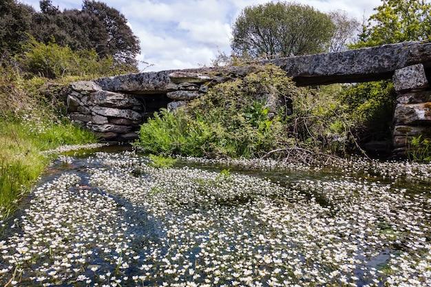 Starożytny kamienny most nad strumieniem z krystalicznie czystą wodą i białymi kwiatami