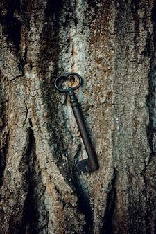 Starożytny klucz kutego żelaza na korze drzew.