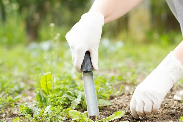 Starsza kobieta / dziewczyna / dama wyrywająca chwasty z bujnym czarnym trawnikiem na swoim ogromnym / dużym ogrodzie botanicznym w czasie cudownej wiosny / lata; ciężka praca (kolorowy obraz, ciepły filtr)