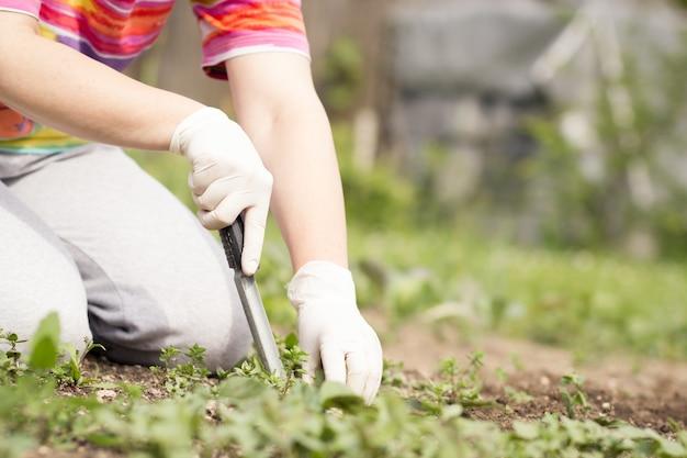 Starsza kobieta / dziewczyna / dama wyrywająca chwasty z bujnym czarnym trawnikiem na swoim ogromnym / dużym ogrodzie botanicznym w czasie cudownej wiosny / lata; ciężka praca