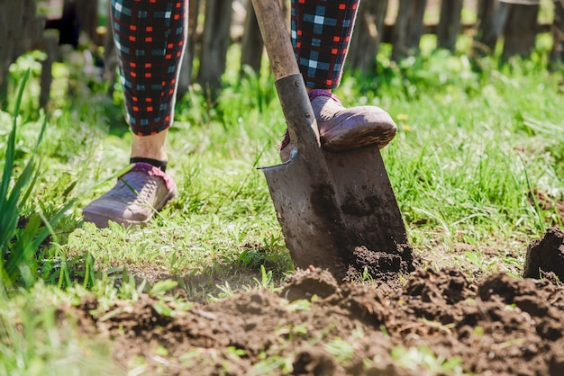 Starsza kobieta kopie ziemię łopatą w swoim ogrodzie we wsi