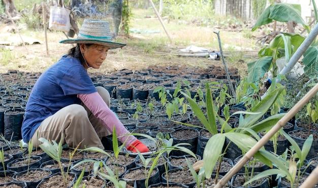 Starsza kobieta posadziła drzewa w ogrodzie, radośnie spędzała wolny czas po przejściu na emeryturę.