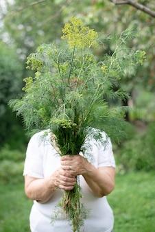 Starsza kobieta trzyma duży pakiet świeżego koperku w ogrodzie, zbiory przydomowe, z bliska.