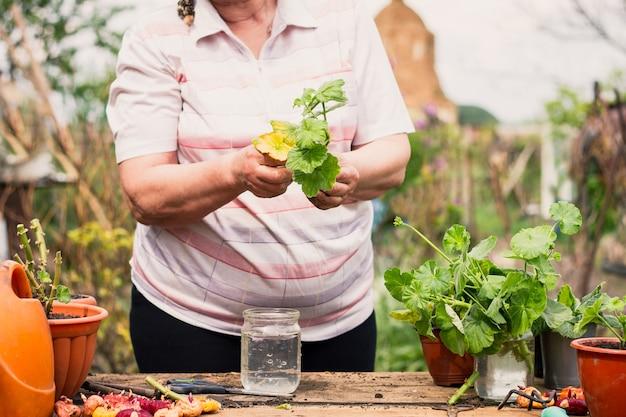 Starsza kobieta w jasnych ubraniach o europejskim wyglądzie opiekuje się zieloną młodą rośliną na zewnątrz