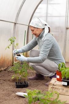 Starsza kobieta zajmuje się sadzeniem w szklarni
