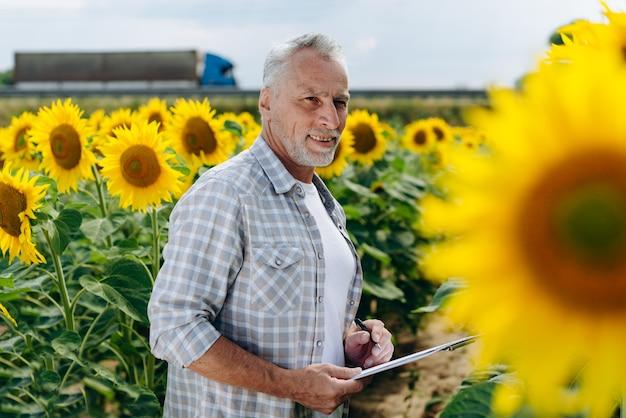 Starszy agronom w polu słoneczników