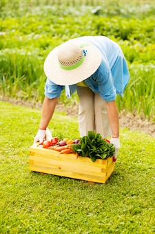 Starszy kobieta podnosząc pudełko wypełnione świeżymi warzywami