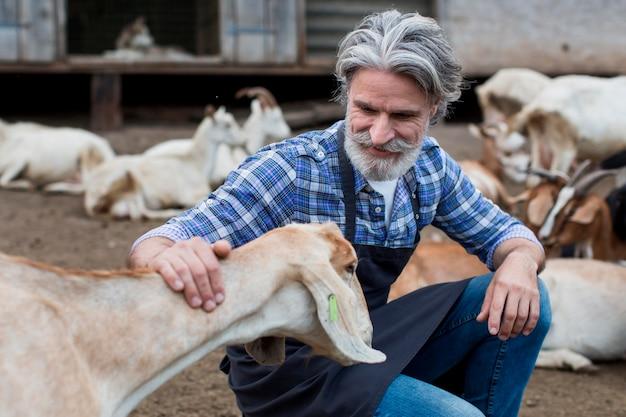 Starszy mężczyzna gra z kozami