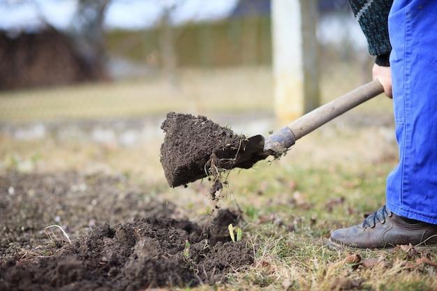 Starszy mężczyzna kopie ogród dla nowych roślin po zimie łopatą
