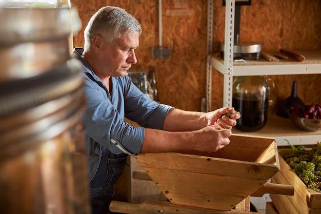 Starszy mężczyzna miażdżący dojrzałe winogrona podczas pracy w winnicy