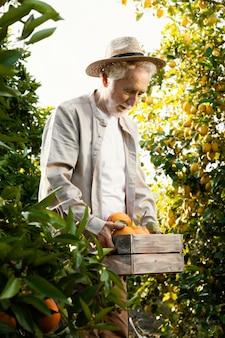 Starszy mężczyzna na plantacji drzew pomarańczowych