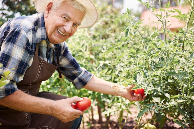 Starszy mężczyzna pracujący w polu z warzywami