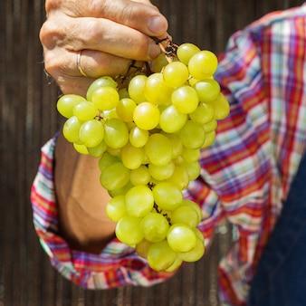 Starszy mężczyzna robotnik rolny trzymający zbiory ekologicznych winogron