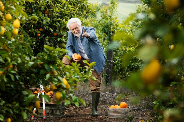 Starszy mężczyzna stojący obok jego drzew pomarańczowych
