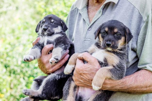 Starszy mężczyzna trzyma na rękach dwa szczeniaki. manifestacja miłości do zwierząt