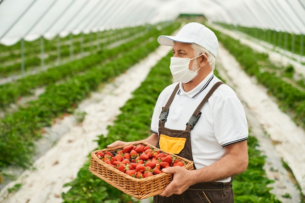 Starszy mężczyzna trzyma wiklinowy kosz z dojrzałą czerwoną truskawką