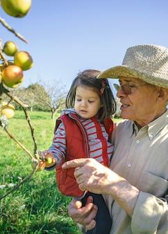 Starszy mężczyzna w kapeluszu trzyma uroczą małą dziewczynkę zbierając świeże jabłka ekologiczne w słoneczny jesienny dzień. dziadkowie i wnuki koncepcja czasu wolnego.