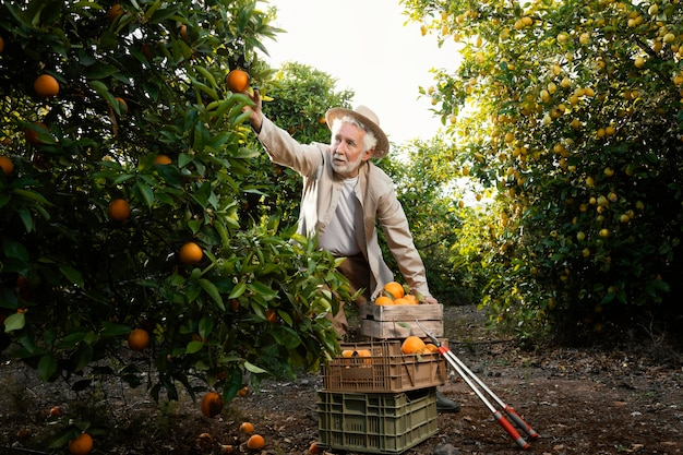 Starszy mężczyzna w plantacji drzew pomarańczowych