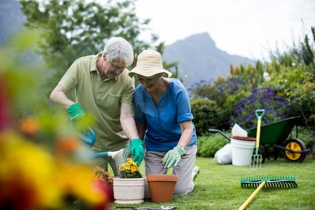 Starszy para podlewania roślin