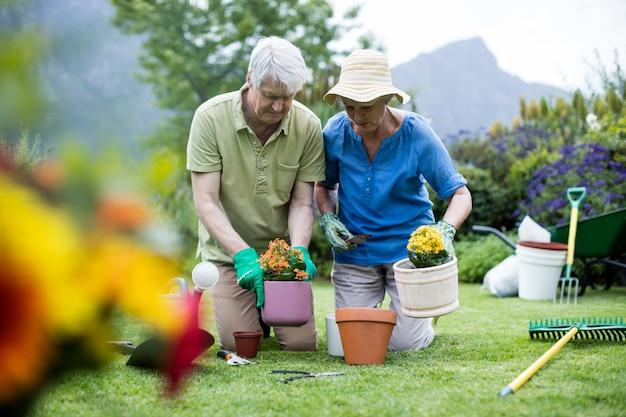 Starszy para sadzenia kwiatów