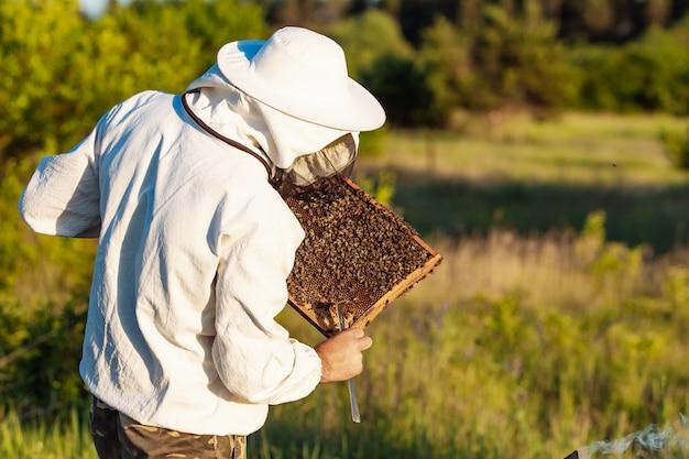 Starszy pszczelarz robi inspekcję w pasiece