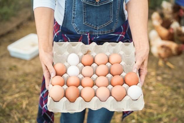 Starszy rolnik kobieta zbierając organiczne jaja w kurniku