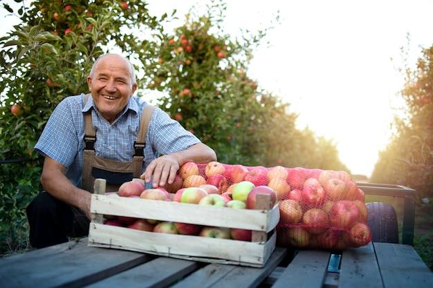 Starszy rolnik mężczyzna stojący w sadzie owocowym przez skrzynię pełną świeżych czerwonych jabłek.