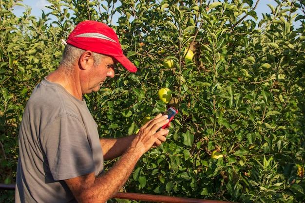 Starszy rolnik w czerwonej czapce za pomocą telefonu komórkowego i zbierając jabłka koncepcja rolnictwa
