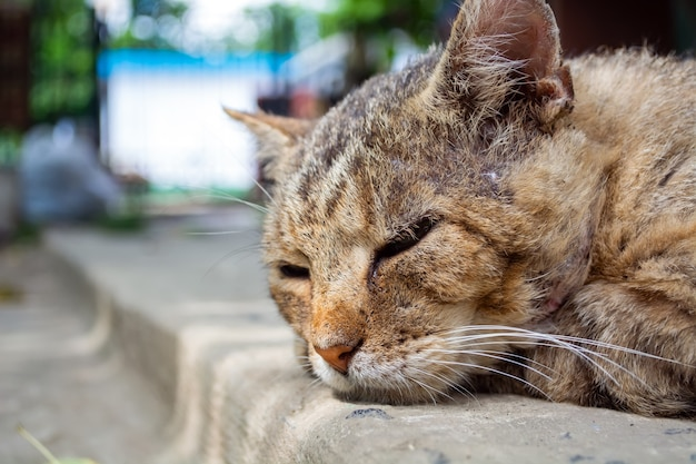Stary bezdomny kot z bliznami śpi na drodze