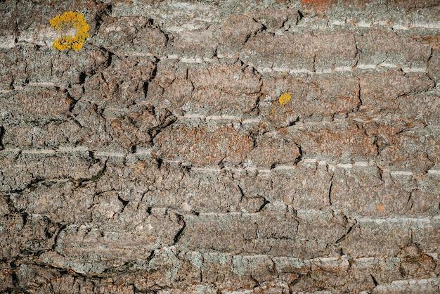 Stary brązowy rustykalne ciemne drewniane tekstury. kora drzewa iglastego