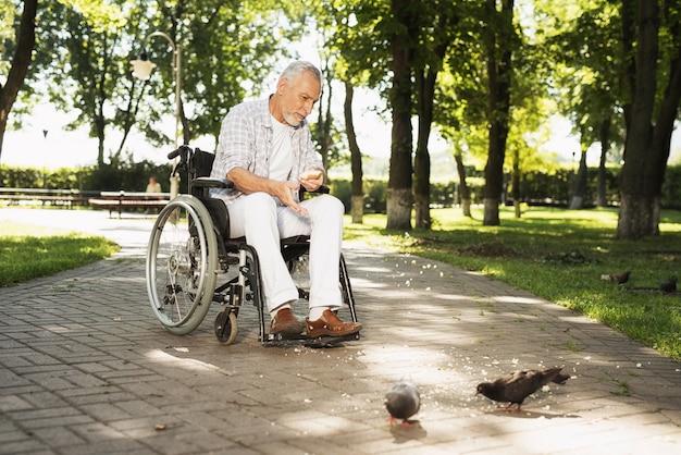 Stary człowiek karmi gołębie. pomoc dla niepełnosprawnych.