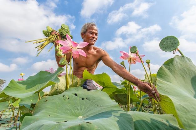 Stary człowiek tajski rolnik rośnie lotosu w sezonie.