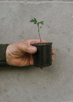 Stary człowiek trzyma czarną doniczkę z zieloną rośliną na tle szarej fakturalnej ściany.