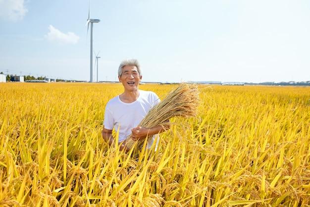 Stary człowiek w polu ryżowym
